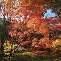Photos: 晩秋の彩り空間