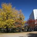 写真: 銀杏巨木の美しさ
