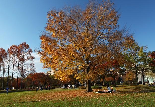 写真: 秋末の休日