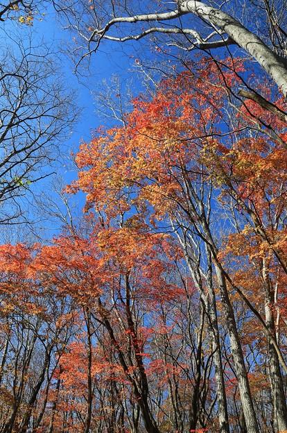 写真: 深まる秋の雑木林