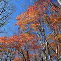 深まる秋の雑木林