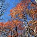 Photos: 深まる秋の雑木林