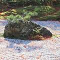 写真: 庭園の松島