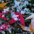 写真: 冬来る