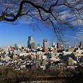 Photos: 師走の杜の都