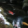 Photos: 冷水を泳ぐ