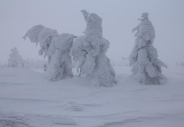 写真: 樹氷物語