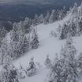 写真: 風雪を滑る