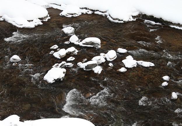 写真: 真冬の水辺