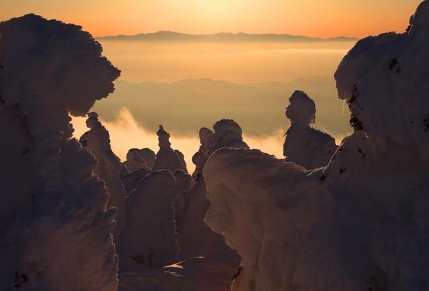 写真: 黄昏の蔵王樹氷