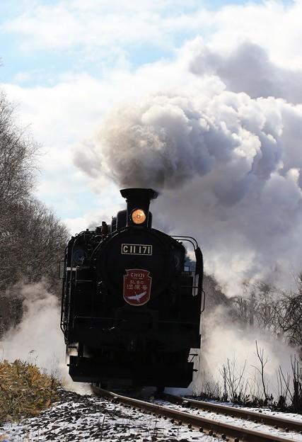 写真: 湿原走る絶景列車