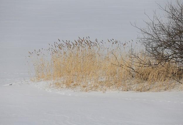 写真: 湿原の雪原