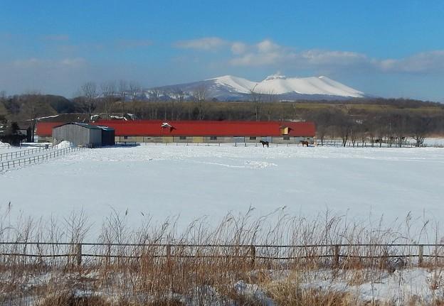 写真: 真冬の牧場