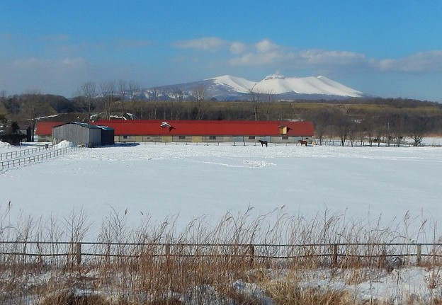 Photos: 真冬の牧場