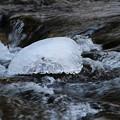 写真: 氷り融けて春来る