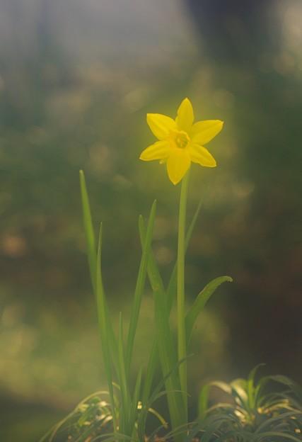 写真: 小さな春