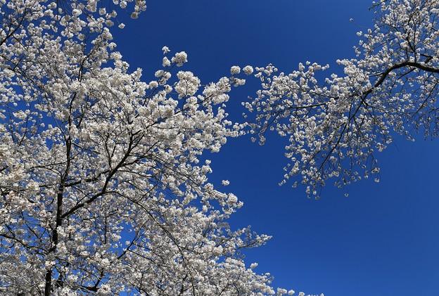 写真: 青空に向かって