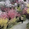 写真: 花の小道
