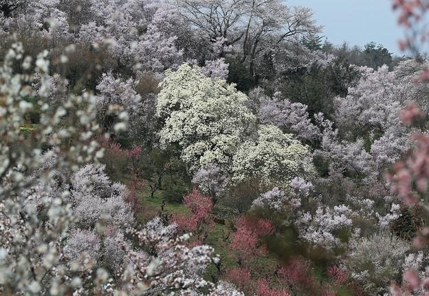 写真: 彩る花々