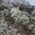 Photos: 彩る花々