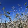 防風林の悲しさ