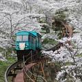 写真: お花見スロープカー