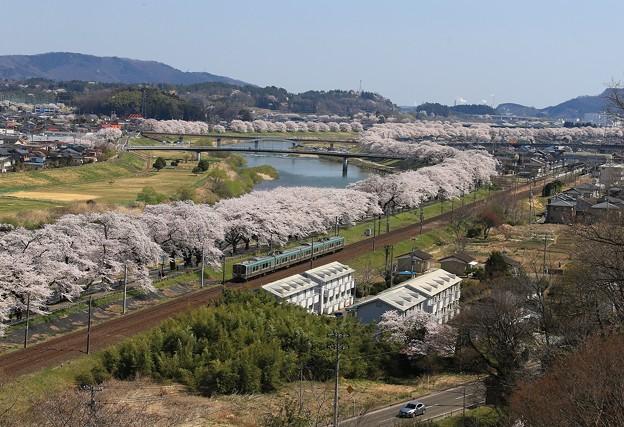 Photos: 桜咲く宮城路