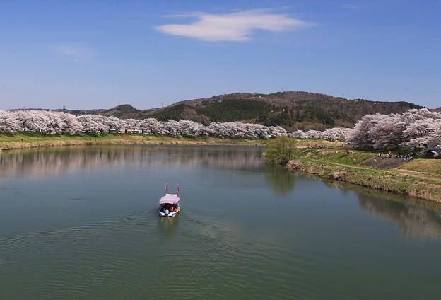 写真: お花見は屋形船で