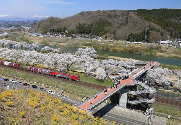Photos: 千桜橋の魅力