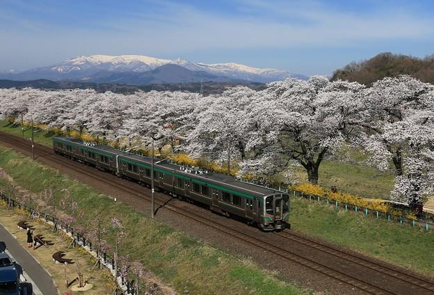 桜咲く東北本線