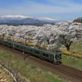 写真: 桜咲く東北本線