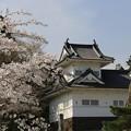 写真: 青葉城桜恋唄