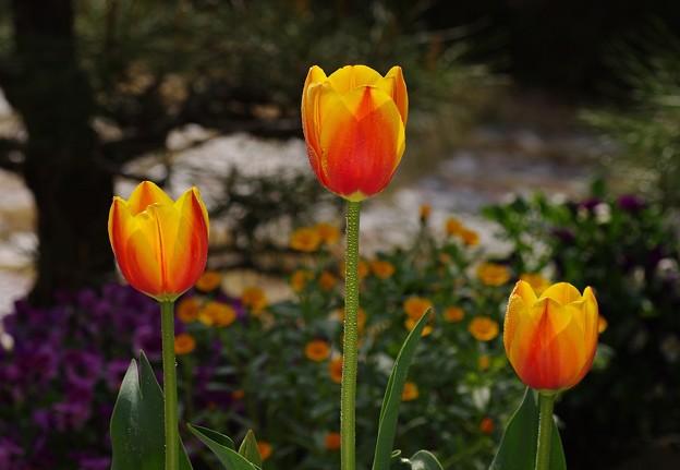 写真: 花あかり