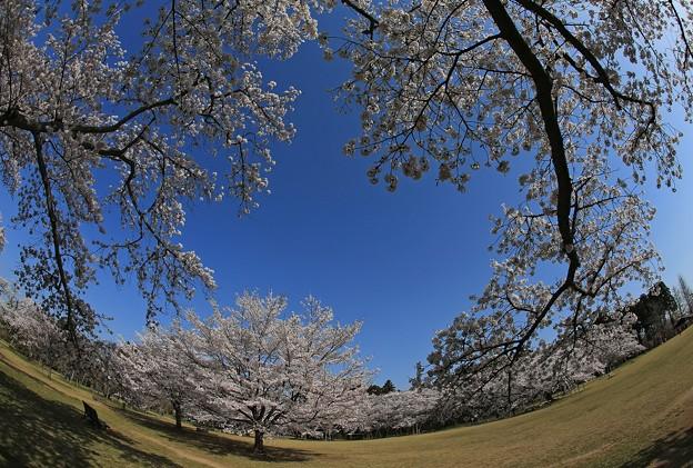 写真: 桜美の空