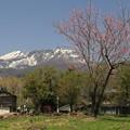 写真: 妙高山麓の春