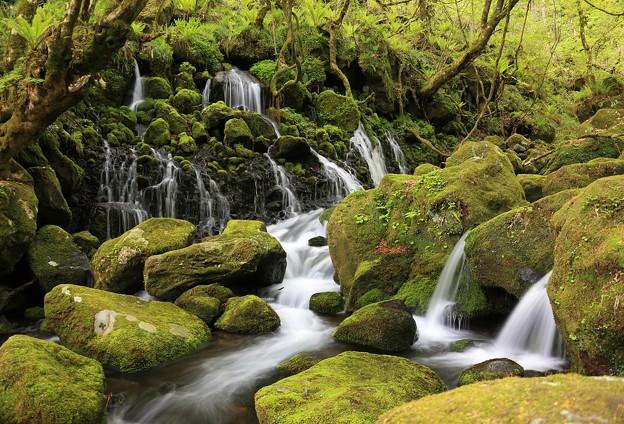 写真: 新緑まばゆい伏流水