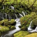 新緑まばゆい伏流水