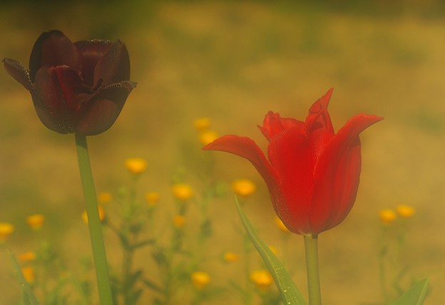 写真: 愛の告白の花