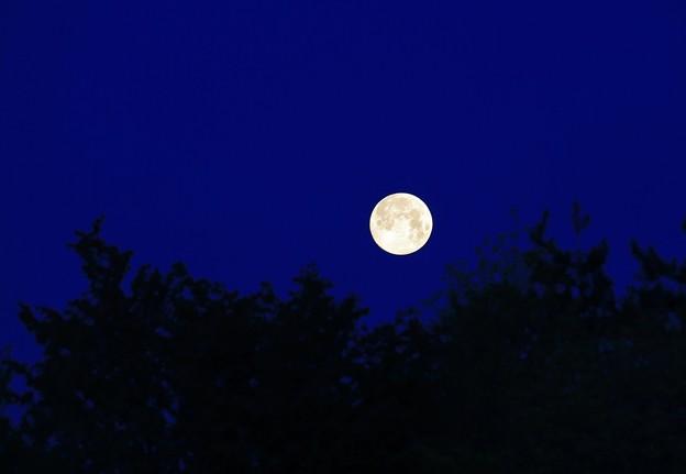 写真: 夜明けの満月