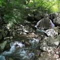写真: 爽やかな新緑の渓谷