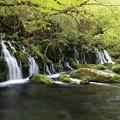 写真: 元滝の味わい深さ