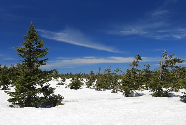 雪残る八幡平