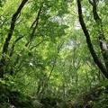写真: 森の新緑美