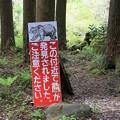 写真: 森の中は熊の居住区