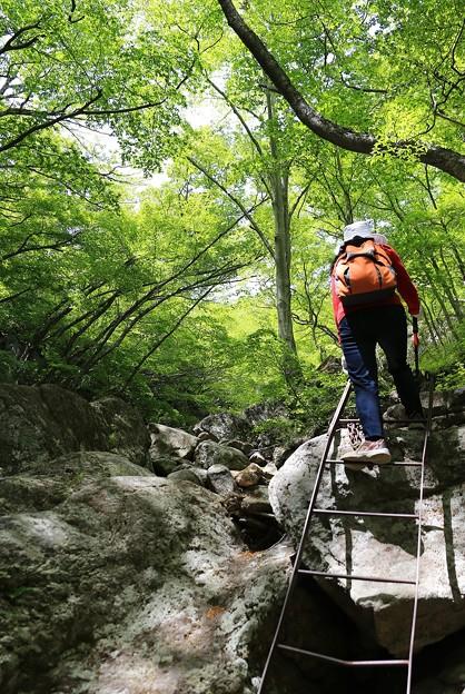 写真: 新緑の登山道