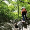 Photos: 新緑の登山道