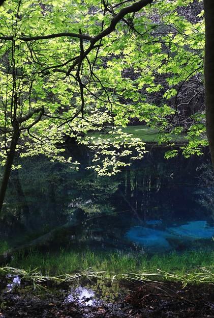 Photos: 神秘の泉・丸池様