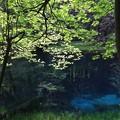 写真: 神秘の泉・丸池様