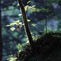 写真: 密林地帯