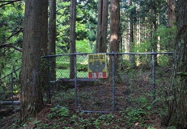 Photos: 危険な森